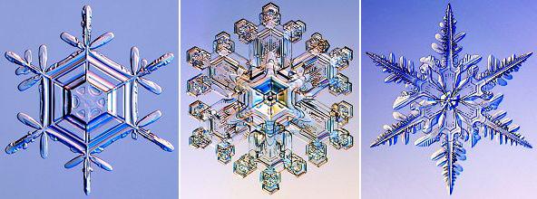 фотографии оригиналов природные формы снежинок