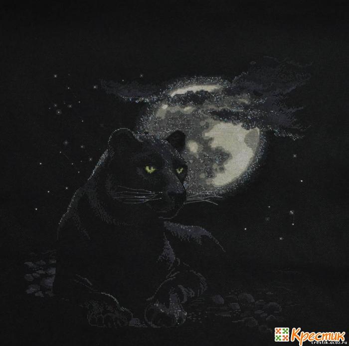 Вышивка котов на черной канве 657