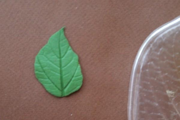 Листья розы из полимерной глины