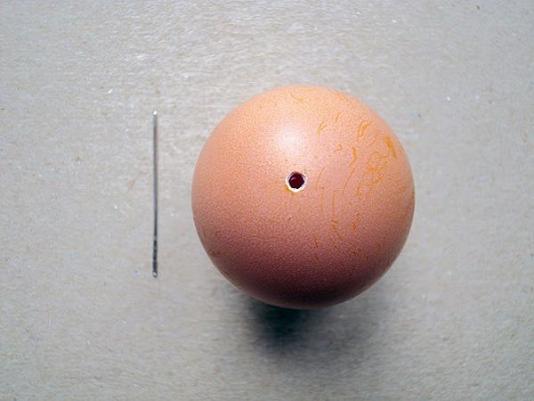 Пустая скорлупа яйца