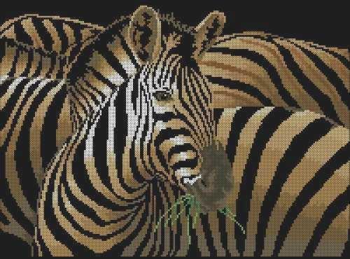 Красавицы зебры