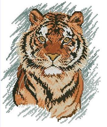 Тигр на серо-голубом фоне