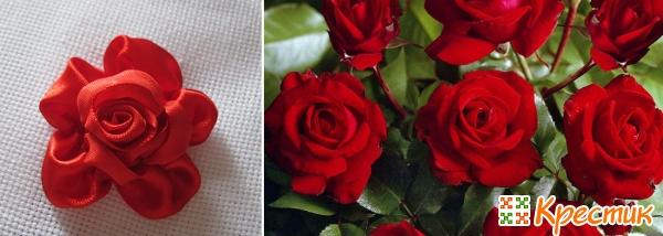 Садовые и вышитая роза