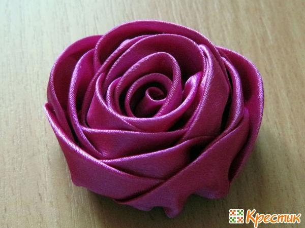 Цветущая красавица роза