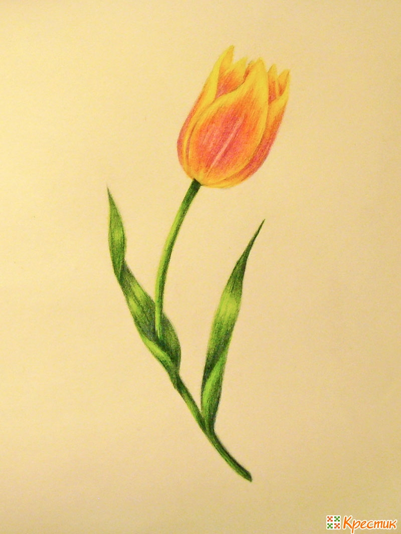 Как нарисовать тюльпаны своими руками