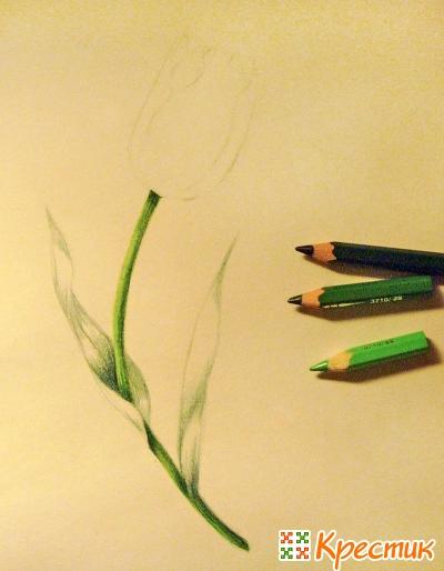 Закрасьте самые темные участки стебля и листьев