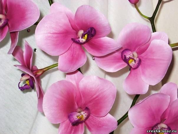 холодного фарфора. Цветы
