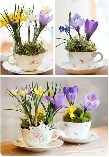 Крокусы в чайных чашках - для хорошего настроения