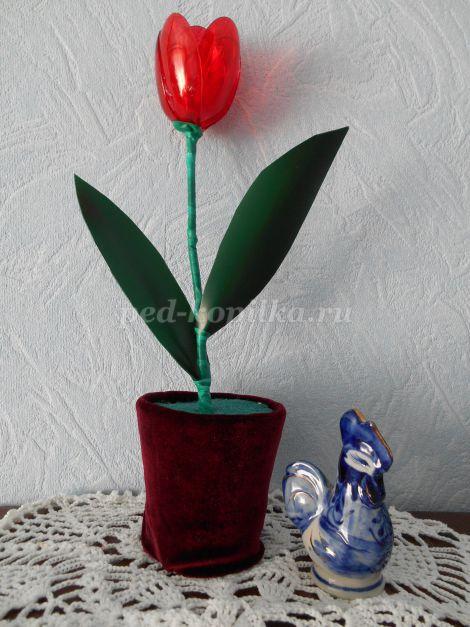 яркий тюльпан