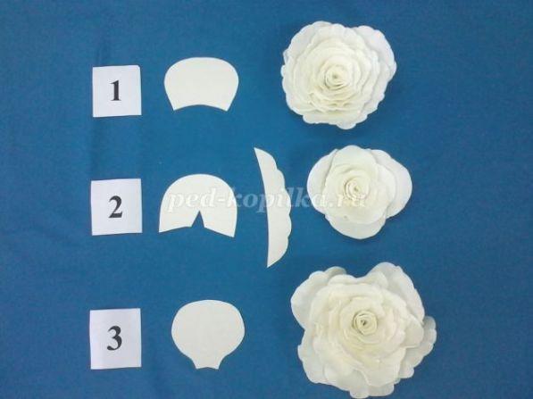От формы лепестка зависит внешний вид цветка