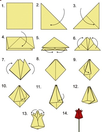 схема тюльпана