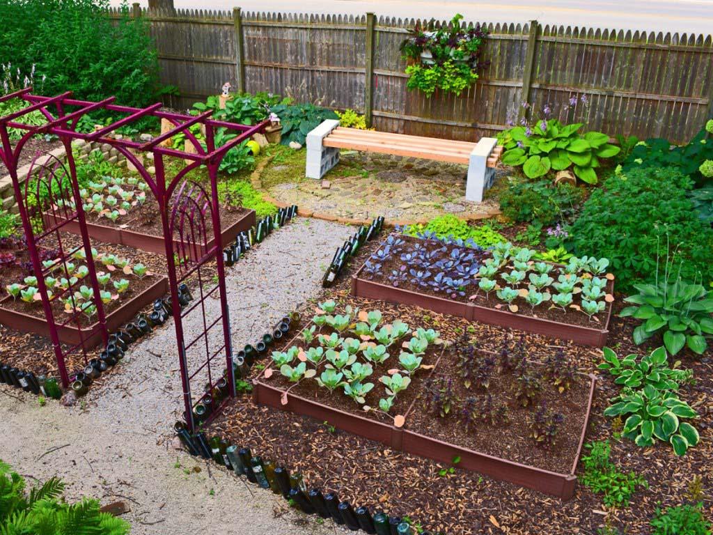 красивый огород на даче своими руками
