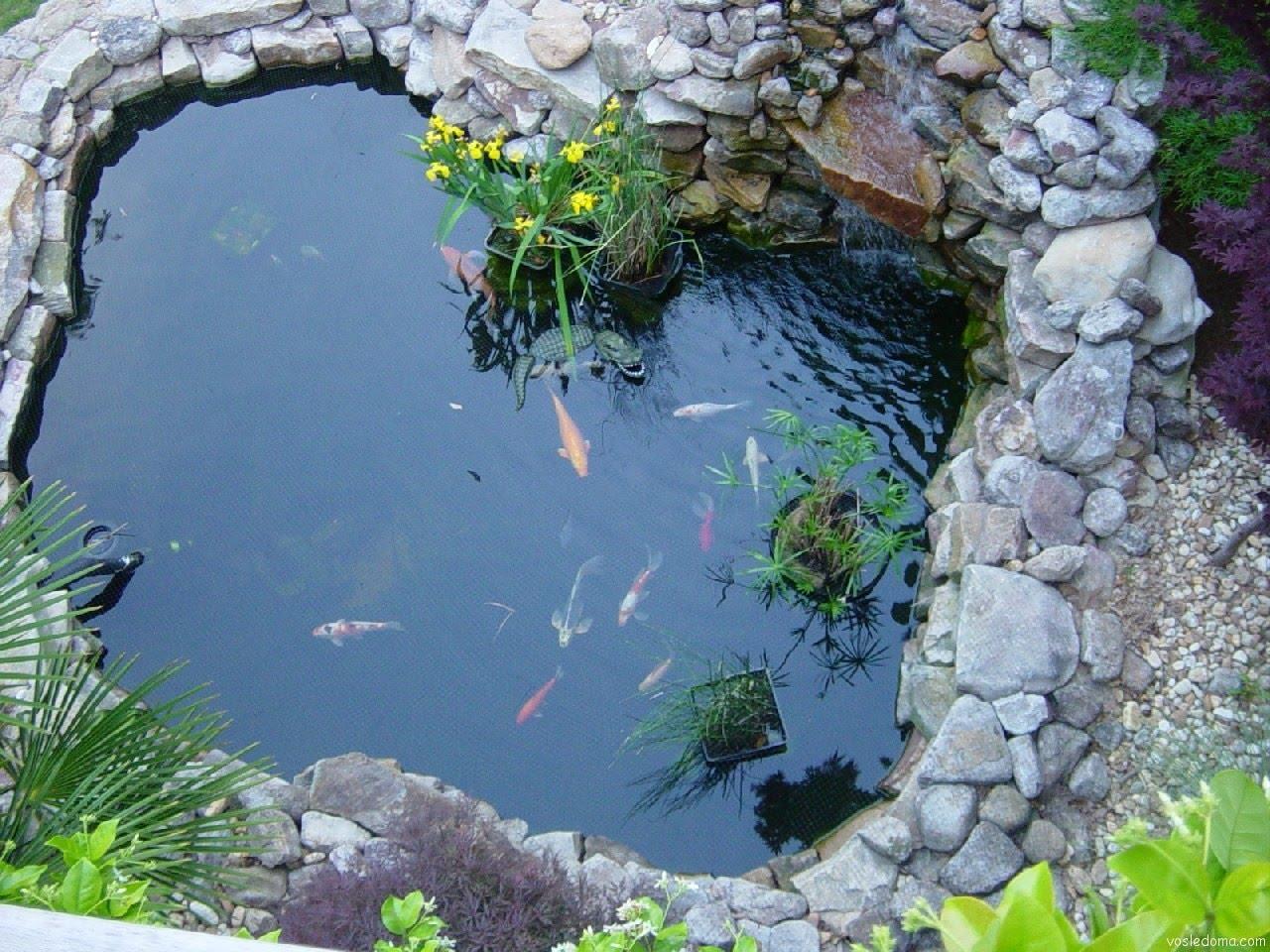 дачный пруд с рыбками
