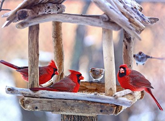 крмушки своими руками для птиц