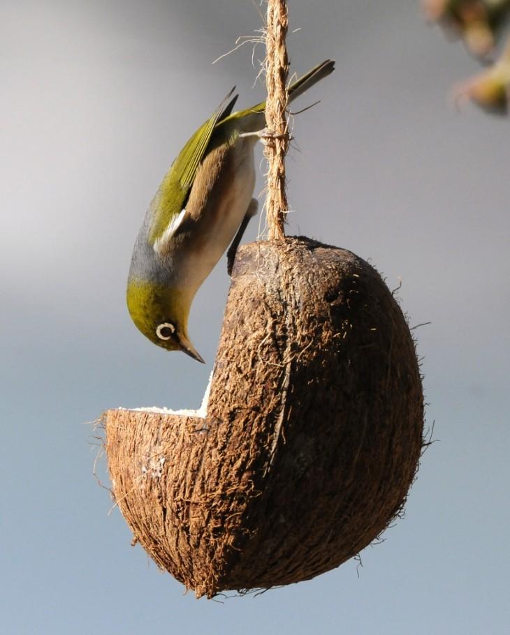 используем кокос