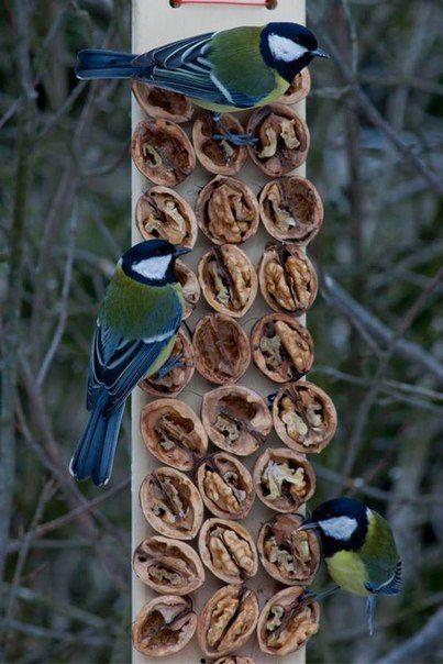 орехи полезны для птиц