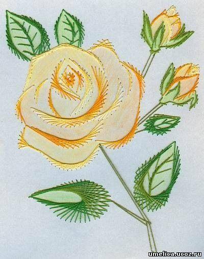 белая роза изонитью