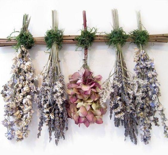 сухоцветы на сушке