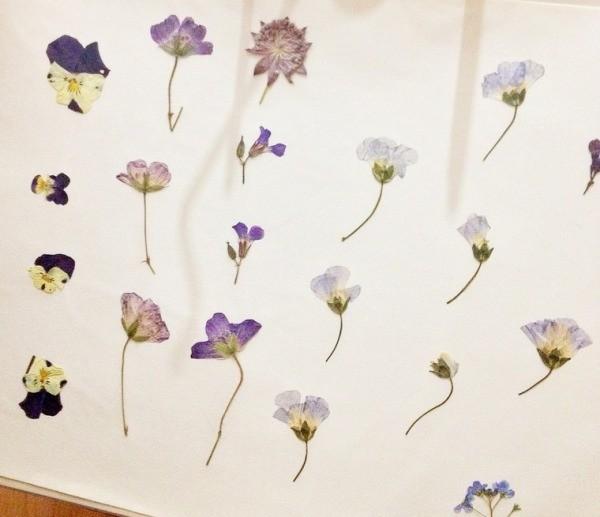 Цветы после пресса